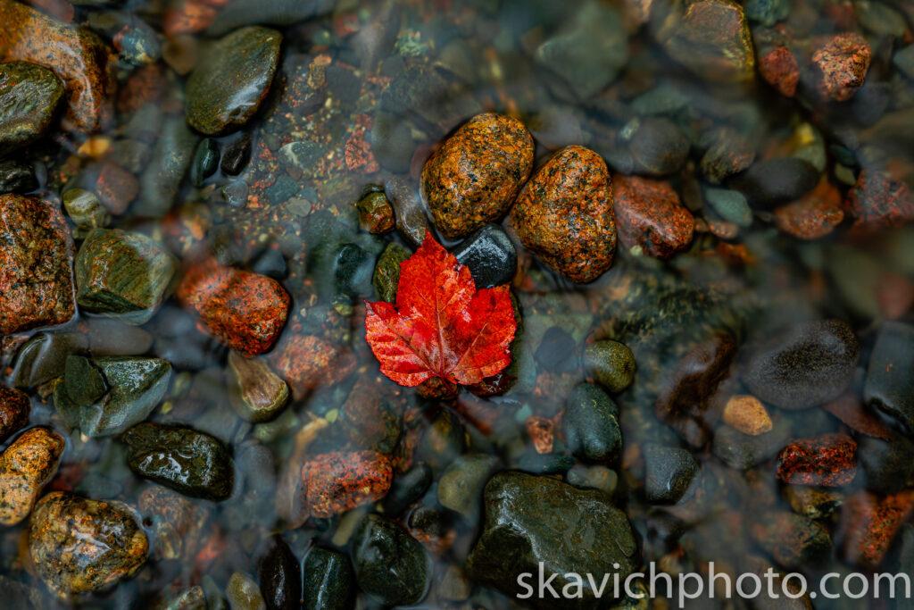 fine art photography print fall foliage Acadia National Park Maine